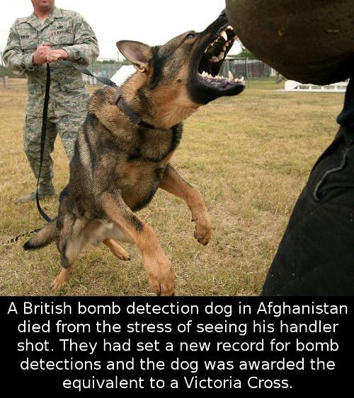 britishbomb