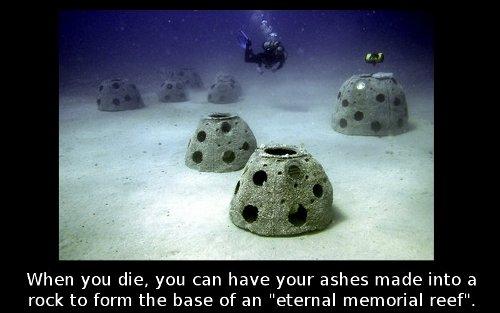 coral memorial
