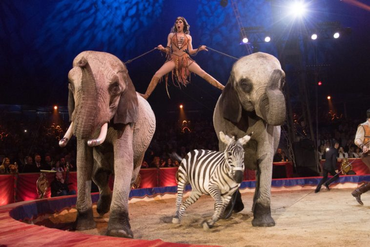 Image result for cruelty of circus animals